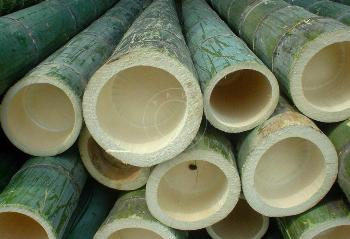canne-bamboo
